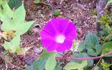 floro de farbito